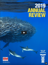 WDC 2019 Annual Review